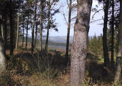 Reflexiorando Bosque
